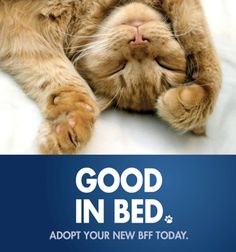 Pre-made and Customizable, Attention-Grabbing Cat Promotion Posters | ASPCA Professional -- Download and use today!