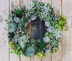 Living Succulent Holiday Wreath - all you have to do is soak this guy in water to keep fresh.