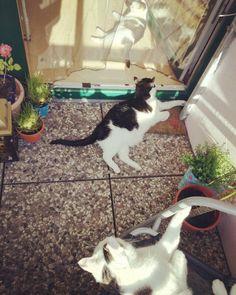 Familiäres Sonnenbaden ✓�� #dasistallesnurfell  #cat #cats #catoftheday #catsofinstagram #catfamily #catlady #crazycatlady #martha #harleyquinn #batman #balcony #balconygarden #oase #sun #family #catmom #plants #adoptdontshop�� http://misstagram.com/ipost/1553216724526395193/?code=BWOImG0l285