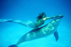 this would be one of the coolest this to do...and i don't just mean swim with the dolphin...i mean to be mermaid too.