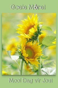 Sunflowers And Daisies, Flora Flowers, Beautiful Flowers, Outdoor Photography, Nature Photography, Sunflower Photography, Sunflower Pictures, Sunflower Wallpaper, Beautiful Nature Wallpaper