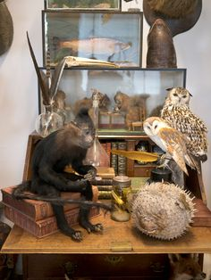"""My Trip to Alexis Turner's """"London Taxidermy"""": Guest Post by Joanna Ebenstein, Morbid Anatomy Editor and Co-Author of """"Walter Potter's Curio..."""