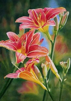 Vintage Red Orange Lilies by Sharon Freeman - Vintage Red Orange Lilies Painting - Vintage Red Orange Lilies Fine Art Prints and Posters for Sale Watercolor Landscape, Watercolor Flowers, Watercolor Art, Art Floral, Floral Prints, Fine Art Amerika, Lily Painting, Cross Paintings, Floral Paintings