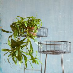 Round Basket Plant Stand, Small in House+Home HOME DÉCOR Furniture Outdoor at Terrain