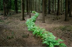 artist Ellie Davies creates lengthy paths through the forest as a form of installation art