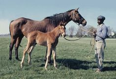 Somethingroyal & Secretariat