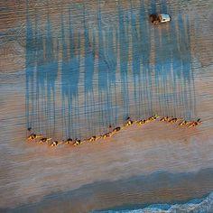 Camel ride on the beach - Broome , Western Australia by aquabumps