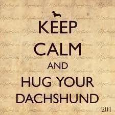 Keep calm and hug a #dachshund :)