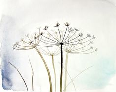 Wild Fennel watercolor - Fine art print of original watercolor painting - Nature wall art - pale blue white aqua botanical 8x10, 11x14 print...