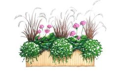 Pelargonie to jedne z najpopularniejszych kwiatów balkonowych. Jakie wybrać PELARGONIE na balkon. Oto propozycja aranżacji skrzynki balkonowej z pelargonii, bakopy i trawy ozdobnej. Aranżacja skrzynki balkonowej: wybieramy kwiaty balkonowe.