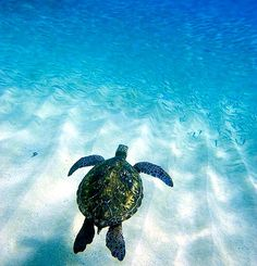 sea turtles = life