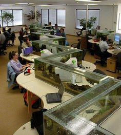 zig zag office aquarium also a desk divider (1) This should be in every office, large and small! Awesome distresser.