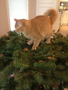 Putting up the tree with Chester