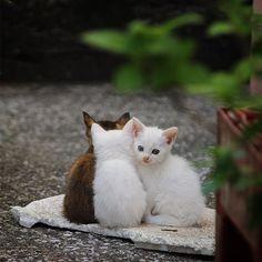 いいね!1,047件、コメント28件 ― Nobue Shimizuさん(@goopee8)のInstagramアカウント: 「あったかカーペット * * #nekoくらぶ #nekoclub #僕らの居場所は言わにゃいで #猫#猫写真 #にゃんすたぐらむ #nekostagram #ねこ #のらねこ部 #のらねこ #cat…」