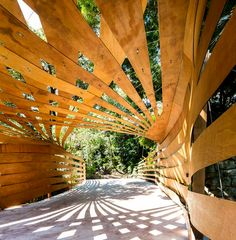 enter projects designs organic entrance canopy in sydney, australia