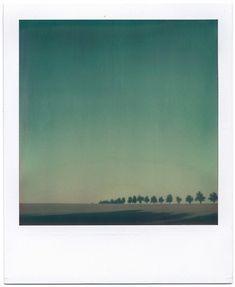 #polaroid w/ #sky & #trees