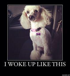 I woke up like this..