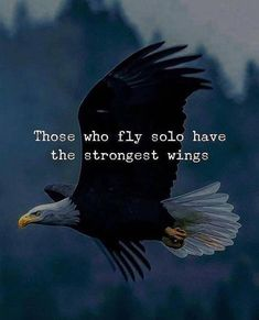 Those who fly solo have the strongest wings life quotes quotes quote life life lessons motivational quotes quotes and sayings life goals quotes to live by Fly Quotes, Wisdom Quotes, True Quotes, Quotes To Live By, Best Quotes, Motivational Quotes, Inspirational Quotes, Qoutes, Warrior Quotes