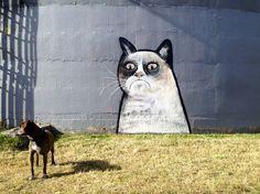 Like a gato, Auckland, NZ