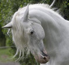 Lord Of The Rings Shadowfax Quotes