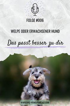 Ein Welpe benötigt dies, ein erwachsener Hund jenes. Wir haben alle Vor- und Nachteile von beidem für dich. Adoption, Dogs, Movies, Movie Posters, Tricks, Animals, Toller Dog, Dog Training School, Pooch Workout