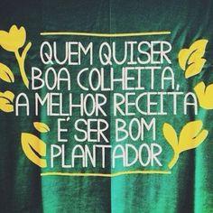 Colher o que plantar
