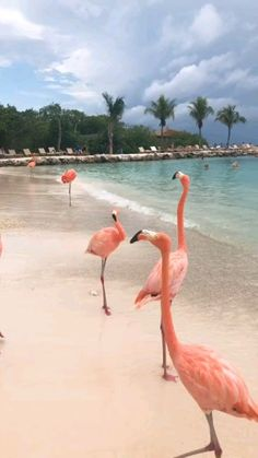 Bolivia - Infraland on Behance Funny Animal Videos, Funny Animals, Cute Animals, Flamingo Wallpaper, Nature Wallpaper, Beautiful Birds, Animals Beautiful, Animal Photography, Nature Photography