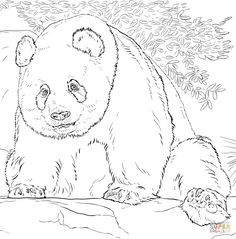Coloring of Page Realistic Zoo Animals | Giant Panda coloring pages ...