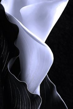 How do you undress a Calla Lily? Photograph it in Black and White. Flowers Nature, My Flower, White Flowers, Flower Power, Beautiful Flowers, Simply Beautiful, Calla Lillies, Calla Lily, Zantedeschia