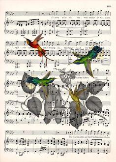 Tisk na starý notový papír  - zátiší s kolibříky