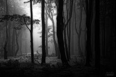 -Secret place of light- by Janek-Sedlar