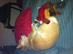 A nap with her head on a pillow and her stuffed animal at her feet.