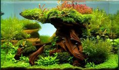 Amazing Aquascape Gallery Ideas that You Never Seen Before #AquariumTanksIdeas