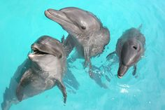 Swimming with the Dolphins in Cancun, Mexico.