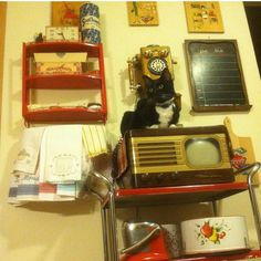 My Vintage Kitchen .... And my Cat Tipper :)