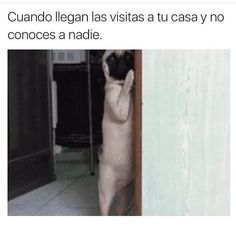 Funniest meme pictures, create the best memes Find Memes, New Memes, Humor Grafico, Life Humor, Funny Texts, Pugs, Haha, Funny Pictures, Hilarious