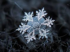 Winter is definitely my favourite season, and although it doesn't snow very often where I live, I am absolutely in love with snow.  Looking at these beautiful pictures of snowflakes, from Alexey Kljatov, I can't help but notice all of the benzene rings.