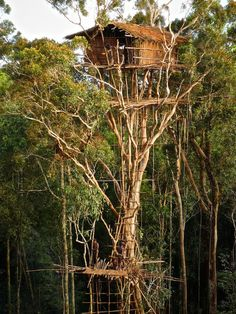 """"""" Korowai Tribe's traditional house, West Papua, Indonesia. The tree house of the tribe can stand up to 60 meters above the ground. This means to avoid wild animal or as a good spot to shot on them or. Vanuatu, Beautiful Tree Houses, Cool Tree Houses, House Trees, Papua Nova Guiné, West Papua, Tree House Designs, Tree Tops, In The Tree"""