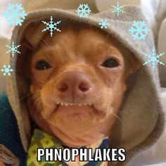 Phnophlakes heheheh - every time I see this dog I die laughing - and I talk like him lol!