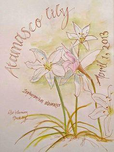 South Carolina LowCountry Nature Journaling and Art, Pam Johnson Brickell