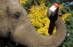 Happy brush your elephant's teeth day! - TODAY.com