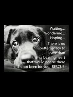 Rescue, there's are so many in needs of a good loving home...