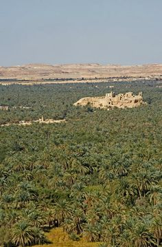 Egypt, Siwa, ruins of Temple of the Oracle of Amun (sixth century BC) visited by Alexander the Great in 331 BC, in middle of oasis, view North from Jabal Dakhrour