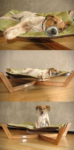 Stylish bed for dog