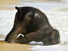 1. Un éléphanteau la tête dans le sable et un eccureil avachi sur une planche