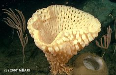 ocean sponges - Google Search