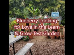 Blueberry thinks she's the Alpha of the Learn & Grow test garden and has been stand-offish, stubborn, oppositional-defiant, and outright mean. But, lately, she's started seeking Anne out and initiating social contact. We've had all three of our girls since 2016. This is a totally new development with Blueberry's behavior and the educational psychologist/behavior analyst in Anne can't help but be fascinated by it #eggs #layinghens #TeachEverywhereGrowAnywhere #LearnGrowEdSeries…