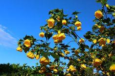 Flowering Shrubs, Botanical Gardens, Plants, Photography, Style, Flowering Bushes, Swag, Photograph, Fotografie