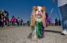 I love dressing all up for the Barkus & Meoux Parade each Mardi Gras!