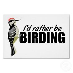 I need this for my car. and my office. Bird Logos, Animal Fun, Cool Pets, Bird Watching, February, Nerd, Friends, My Style, Animals